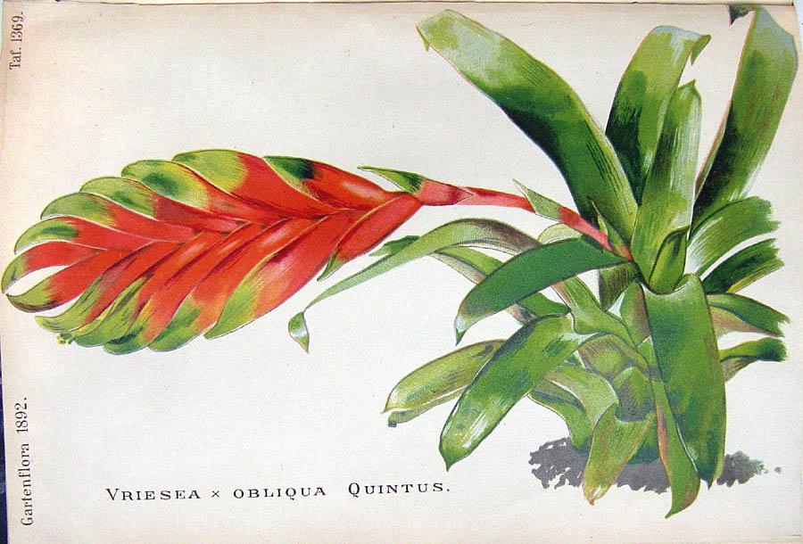 garten flora zeitschrift